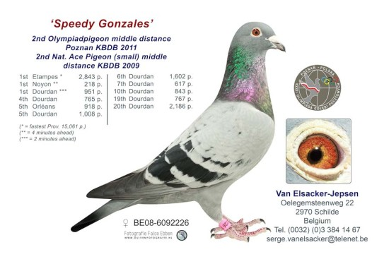 BE17-6067101 Son/Daughter Speedy Gonzales – Olympiad pigeon & 2nd Nat Ace