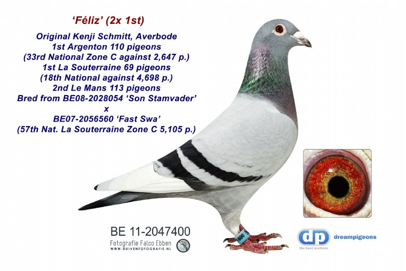 BE11-2047400 Féliz: Winner of 2x 1st!  (hen)