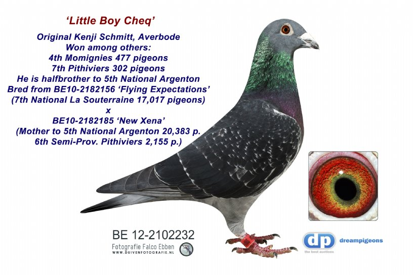 BE12-2102232 Little Boy Cheq: Halfbrother to 5th National Argenton (cock)