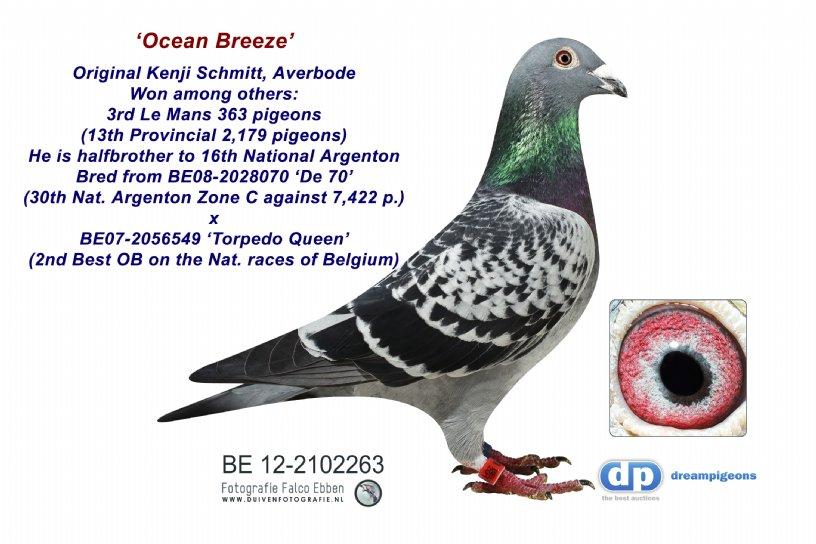 BE12-2102263 Ocean Breeze: 13rd Provincial Le Mans 2,179 p (cock)