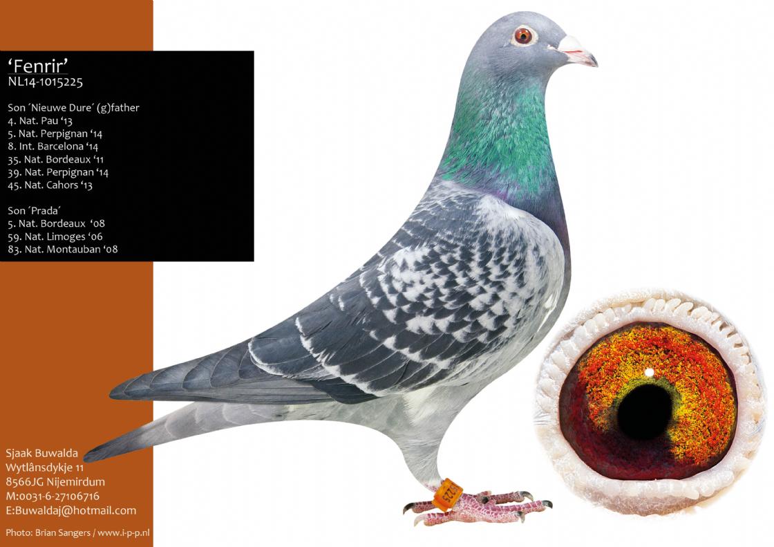 Extra info (1) NL18-1412437 Hen Bloodline 3 X 1st Nat