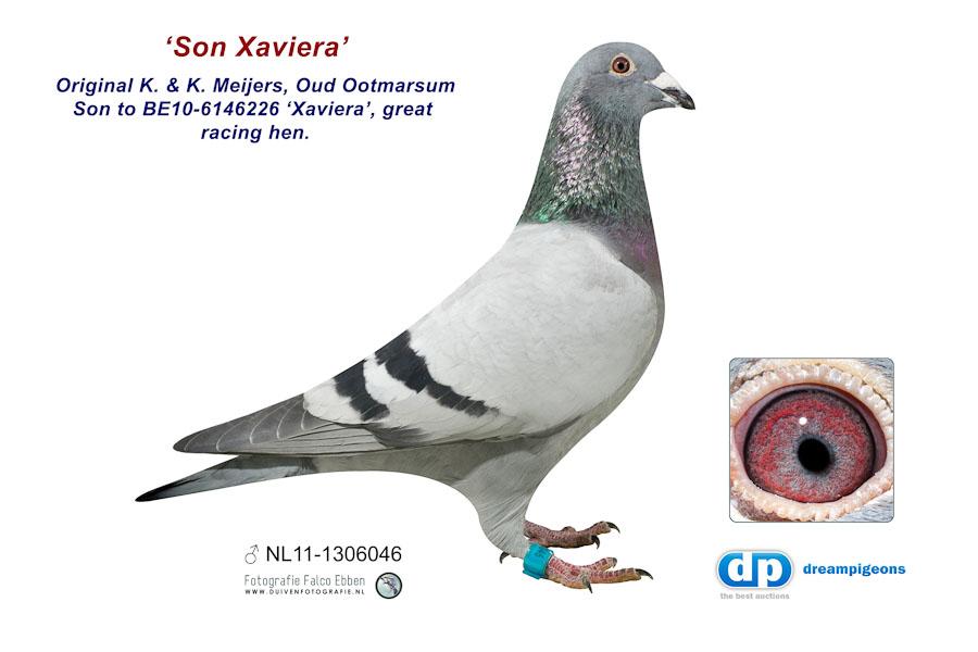 NL11-1306046 Son Xaviera