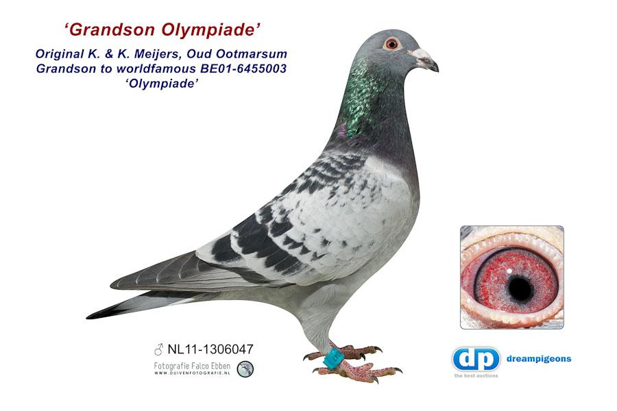 NL11-1306047 Grandson Olympiade