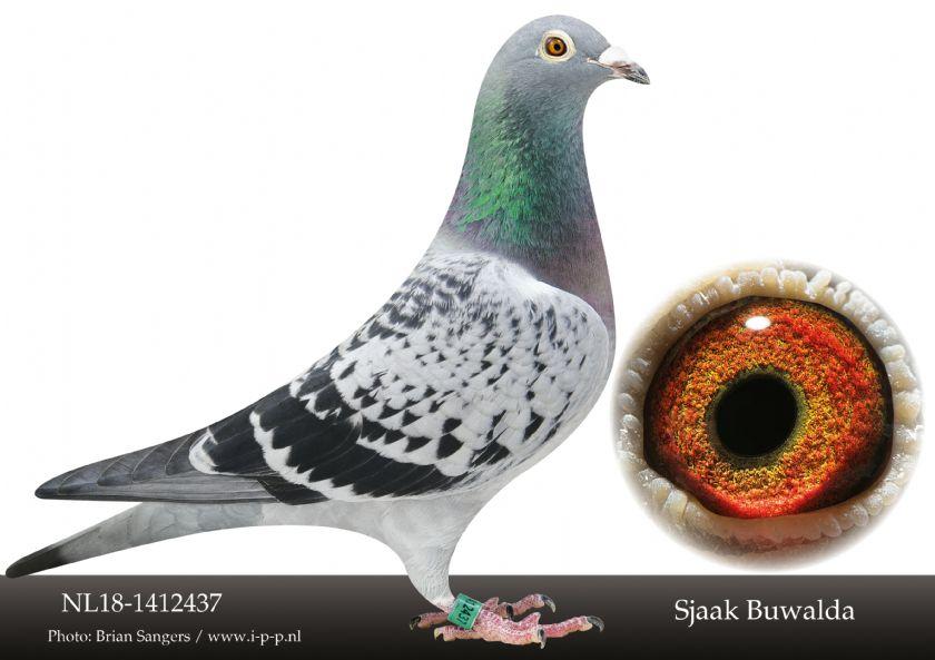 NL18-1412437 Hen Bloodline 3 X 1st Nat