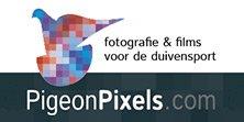 PigeonPixels