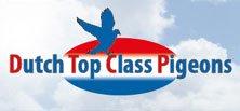 Dutch Top Class Pigeons