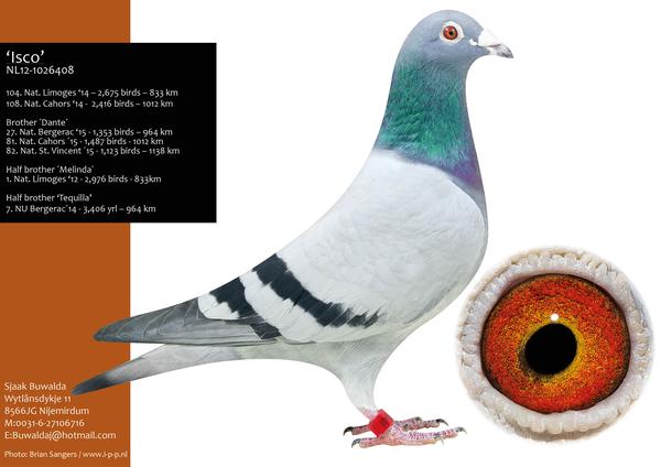 Extra info (1) NL18-1412452 Cock Bloodline 1st Nat Limoges
