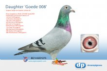 B-14-6201275 Direct son/daughter topracer Goede 008 9th Nanteuil 27,856 p.