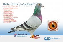 B-14-6201400 Halfbrother 12th National La Souterraine 9,136 pigeons � (cock)