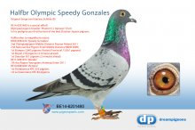 B-14-6201480 Halfbrother Olympic Speedy Gonzales � (cock)