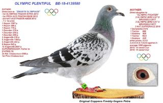 BE18-4139580 Olympic Plentiful