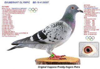 BE18-4139587 EXUBERANT OLYMPIC