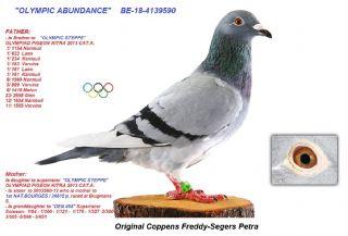 BE18-4139590 OLYMPIC ABUNDANCE