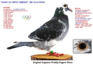 BE18-4139593 DARK OLYMPIC INBRED