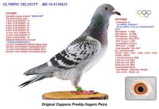 BE18-4139633 OLYMPIC VELOCITY