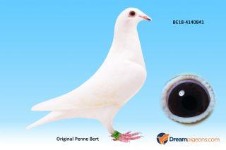 BE18-4140841 - Witte Milka