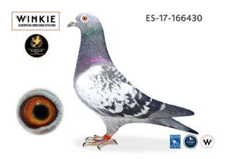 ES17-166430 Cock   100% Wijnands
