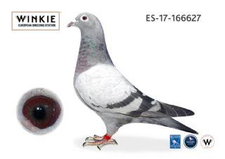ES17-166627 Cock 100% Janssen Arendonk