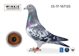 ES17-167125 Cock  100% Wijnands