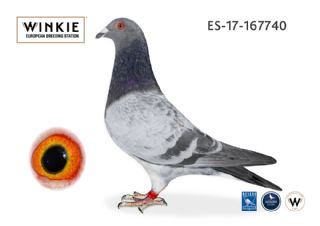 ES17-167740 Cock 100% Koopman