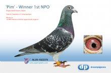 NL09-1922378 Pim: 1st NPO Winner Pithiviers 6,261 pigeons
