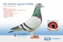 NL10-1380701 4th Peronne 8,120 pigeons � (cock)