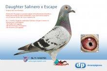 NL11-1434763 Daughter topbreeders Salinero x Escape (hen)