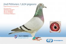 NL11-1886602 2nd Pithiviers 1,624 pigeons - (hen)