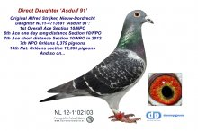 NL12-1102103 Daughter Asduif 91: 1st Ace Overall Section 10/NPO (hen)