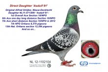 NL12-1102104 Daughter Asduif 91: 1st Ace Overall Section 10/NPO (hen)