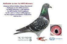 NL12-1102106 Halfsister 1st NPO Pithiviers 7,749 p & 1st NPO Duffel 18,270 p (hen)