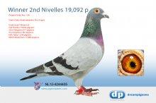 NL12-4244405 2nd Nivelles 19,092 pigeons (cock)