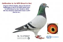 NL12-4708407 Halfbrother 1st NPO Breuil le Vert 10,033 (cock)