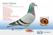 NL14-1068169 Full sister to Paloma (hen)