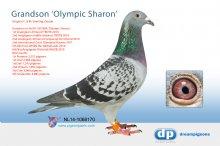 NL14-1068170 Grandson Olympic Sharon (cock)