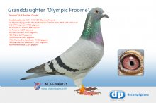 NL14-1068171 Granddaughter Olympic Froome (hen)