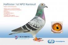 NL14-1068174 Halfsister De Nanteuil 1st NPO Nanteuil (hen)
