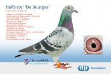NL14-1068175 Halfsister Den Bourges (hen)