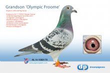 NL14-1068178 Grandson Olympic Froome (cock)