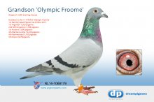 NL14-1068179 Grandson Olympic Froome (cock)