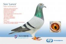 NL14-1068180 Son Lance (cock)