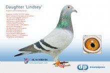 NL14-1068184 Daughter Lindsey (hen)