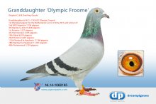 NL14-1068185 Granddaughter Olypic Froome (hen)