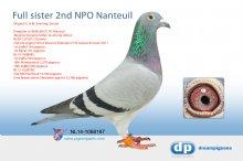 NL14-1068187 Full sister 2nd NPO Nanteuil (hen)