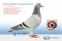 NL14-1068249 Direct Daughter De Nanteuil x Olympic Sharon! (hen)