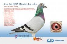 NL14-1617400 Direct son 1st NPO Mantes La Jolie 1,769 pigeons - (cock)
