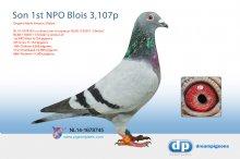 NL14-1678745 Son 1st NPO Blois against 3,107 pigeons (cock)