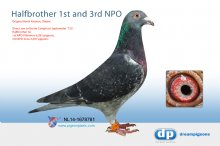 NL14-1678781 Halfbrother 1st and 3rd NPO (cock)