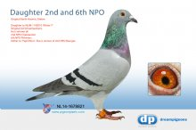 NL14-1678821 Direct daughter 2nd and 6th NPO x famous Noor (hen)