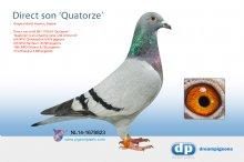 NL14-1678823 Direct son Quatorze 6th, 8th and 16th NPO (cock)